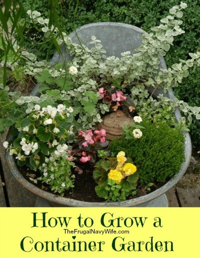 How to Grow a Container Garden2