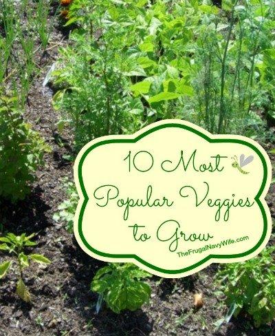 10 Most Popular Veggies to Grow