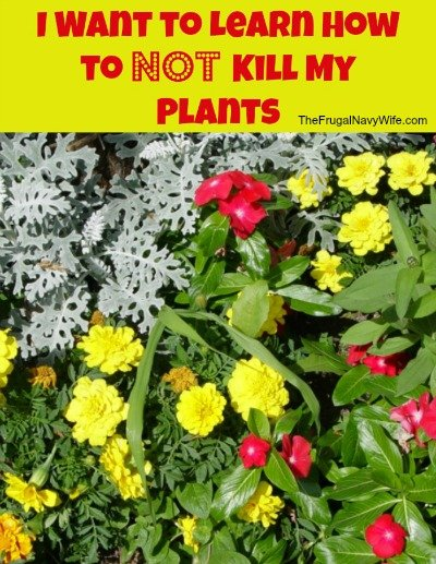 Not Kill My Plants