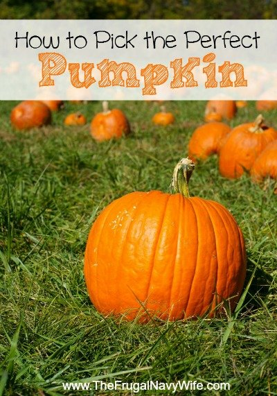 Pick the Perfect Pumpkin