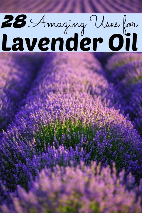 28 Amazing Uses for Lavender Oil