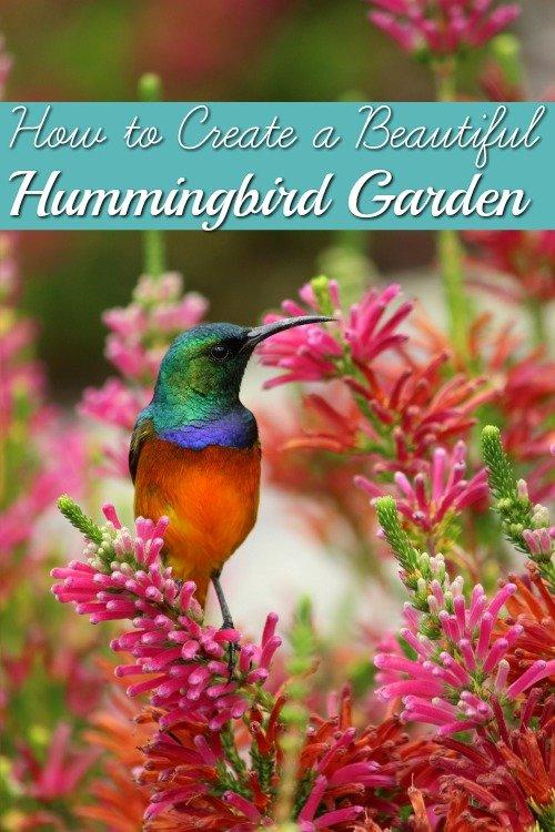 How to Create a Beautiful Hummingbird Garden