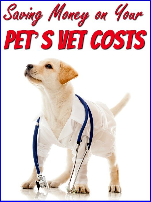 Saving Money on Your Puppy's Vet Costs