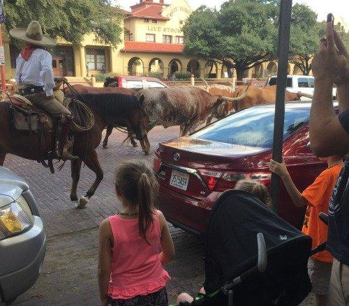 clif-kid-bars-cattle-drive