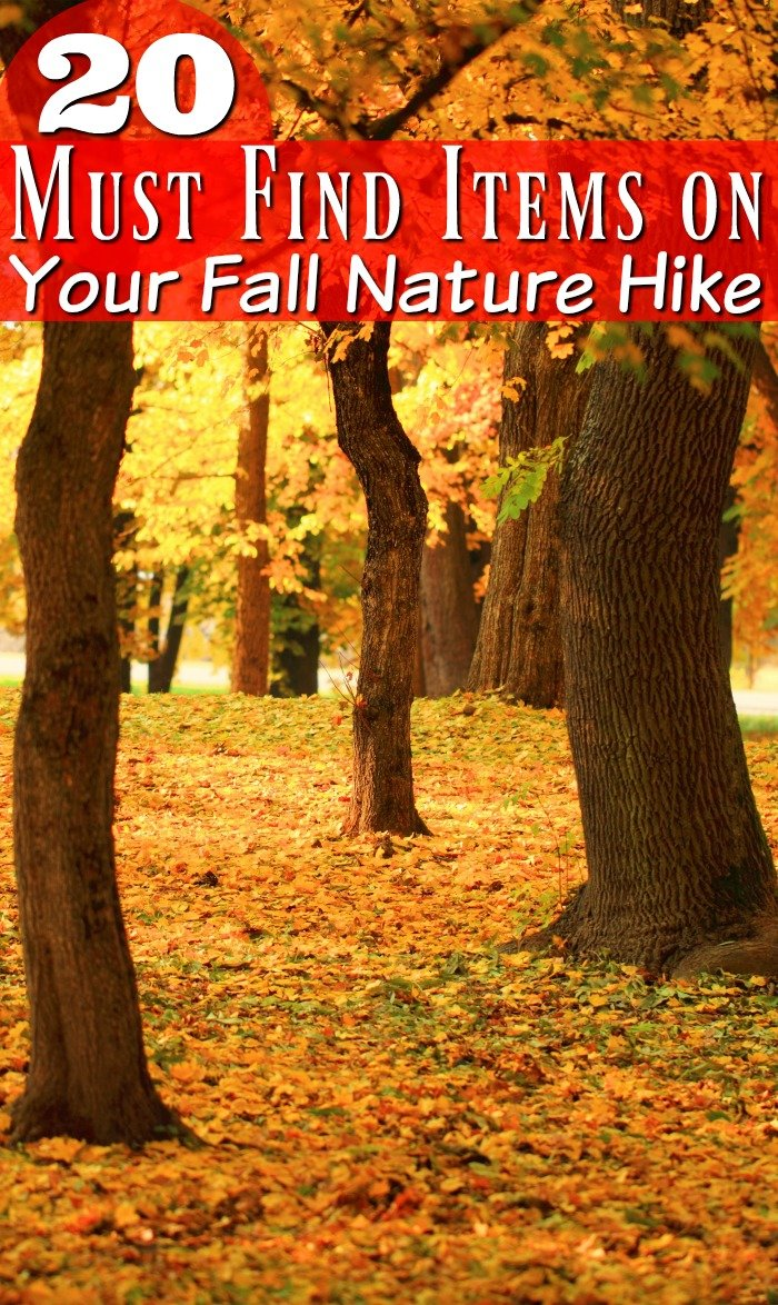 Taking a nature hike any time of year is a great addition to homeschooling, but one in the fall has some extra benefits. See why.
