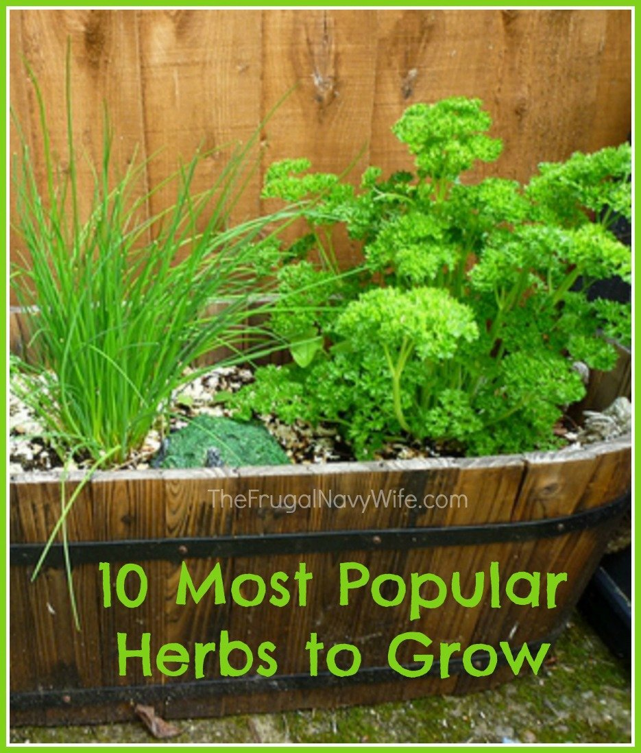10 most popular herbs to grow. Black Bedroom Furniture Sets. Home Design Ideas
