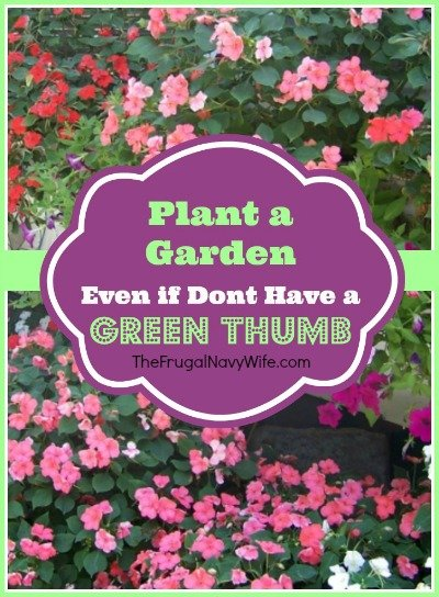 Plant a Garden Even if Don't Have a Green Thumb