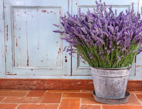 Lavender Oil Uses - Bouquet of lavender in a rustic setting