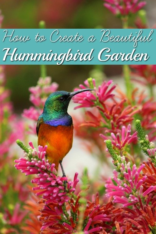 How to Create a Beautiful Hummingbird Garden