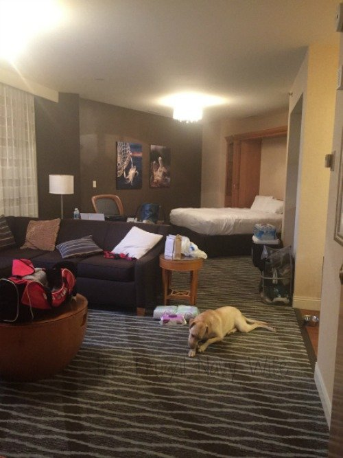Hyatt Regency Chesapeake Bay Pet Friendly Hotel