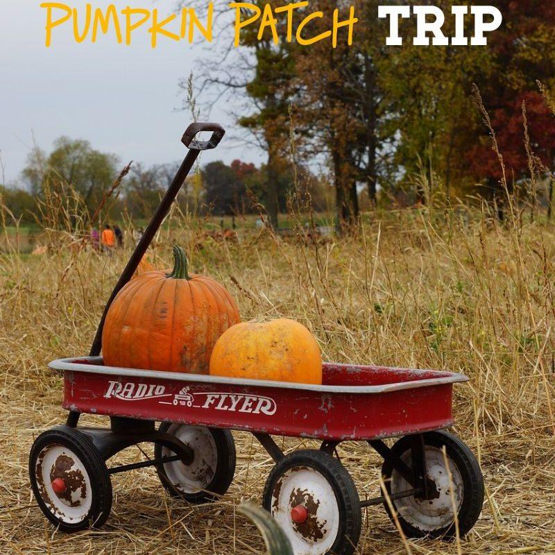 20 Fun Must Find Items on a Fall Pumpkin Patch Trip