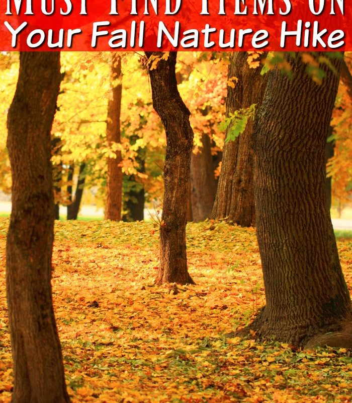 20 Must Find Items to Spy on Your Fall Nature Hike