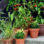 An indoor garden is a great way to grow your food and also cut down on the grocery budget. A DIY Indoor herb garden is easy as these 5 steps. #gardening #indoorgarden #diygarden #containergarden #frugalnavywife | Gardening | Container Garden | Indoor Garden Ideas | How to make a Container Garden