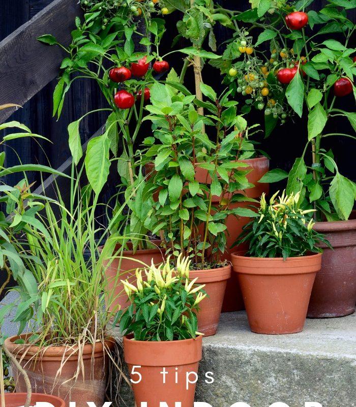 5 Tips for a DIY Indoor Herb Garden