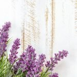 Here are some of the amazing uses for lavender oil can help with plus a bonus idea for parents! Jump on the bandwagon, you won't be sorry. #lavender #oils #naturalremedy #homeremedies #essentialoils #frugalnavywife | Uses for Lavender | Essential Oils | Lavender Oil Uses | Natural Remedies | Home Remedies