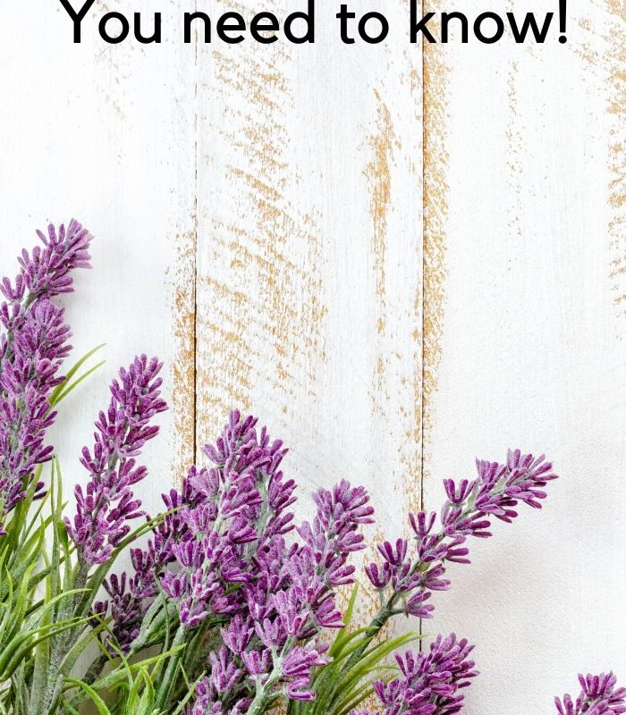 30 Easy Uses for Lavender Oil You Need to Know!